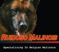 Ruidoso Malinois